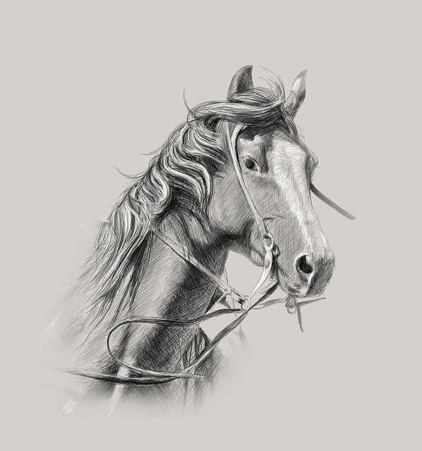 Les chevaux : races, historique et qualités